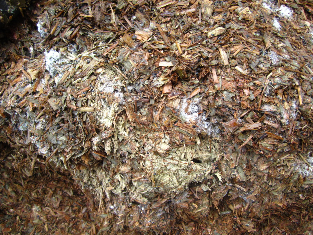 Mould can be found in many feed ingredients and forages.