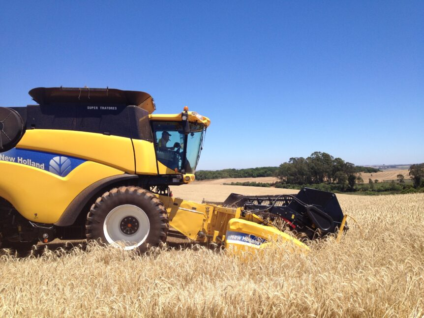 Harvest time brings new grains and the threat of mycotoxins